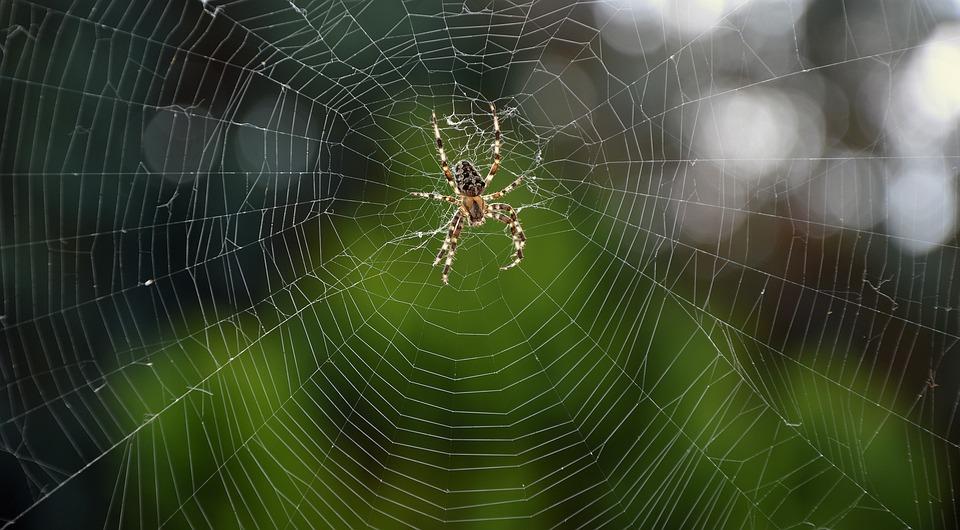 disinfestazione-ragni