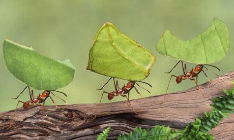 10 curiosità sulle formiche