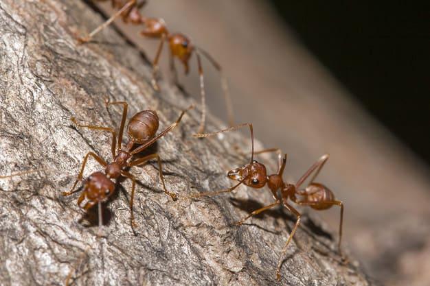 Eliminare le formiche e prevenirne l'infestazione