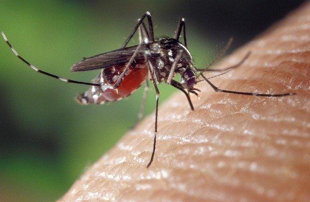 cosa attira le zanzare