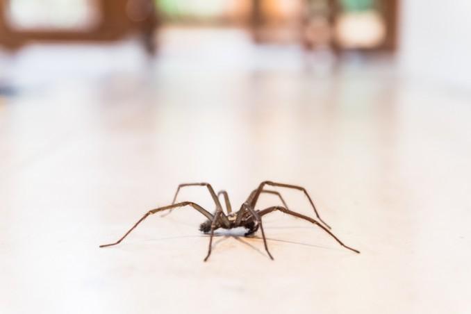 disinfestazione ragni