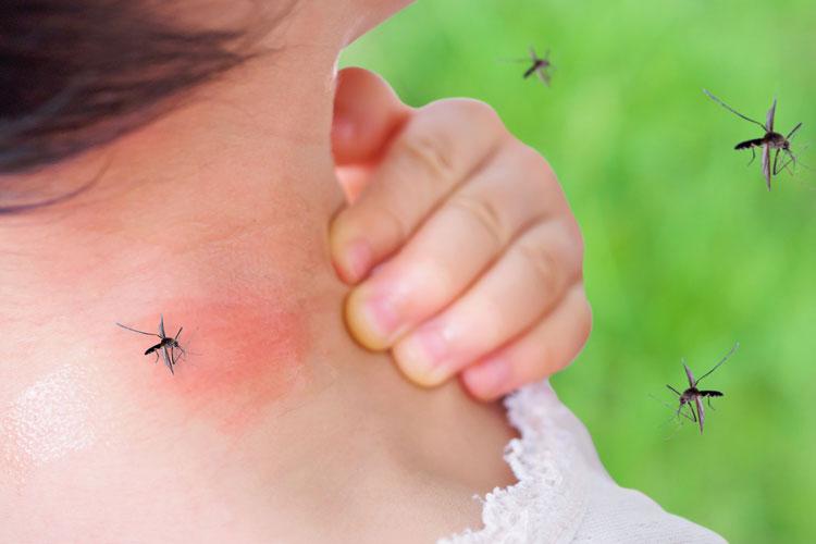 Come tenere lontano le zanzare