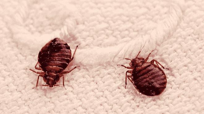 riconoscere le punture delle cimici del materasso